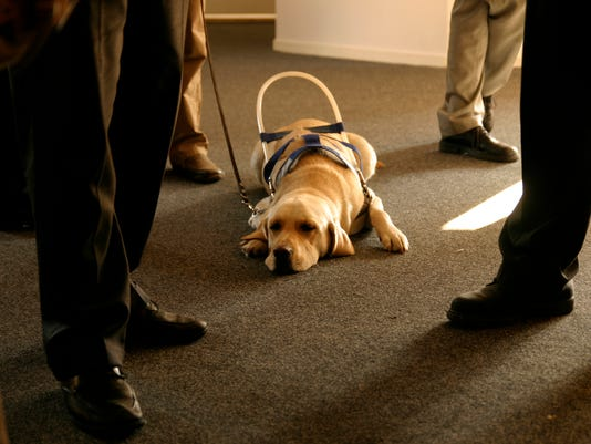 several states crack down on dog service fraud