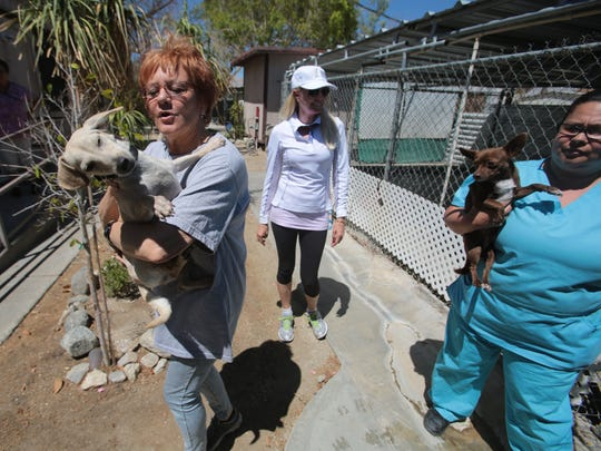 The Humane Society of the Desert said it plans to temporarily close its Desert Hot Springs Animal Shelter through February. In a 2014 file photo, the Humane Society of Desert transfers dogs from the Save-A-Pet campus in Desert Hot Springs.
