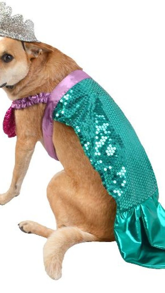 A mermaid costume for a dog on Halloween from Target.