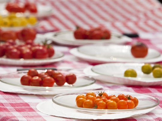 Different varieties of tomatoes sit on a tasting table