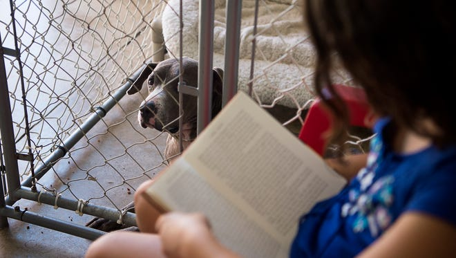Youth for Sarge is a program for children to gain confidence in reading and provide companionship to animals at Sarge's Animal Shelter in Waynesville.
