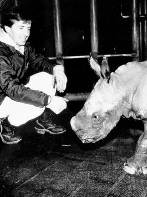 1990: Safar supervisor and animal trainer for Great Adventure Jerry Kucera plays with Elvis, a baby rhino, at Great Adventure.
