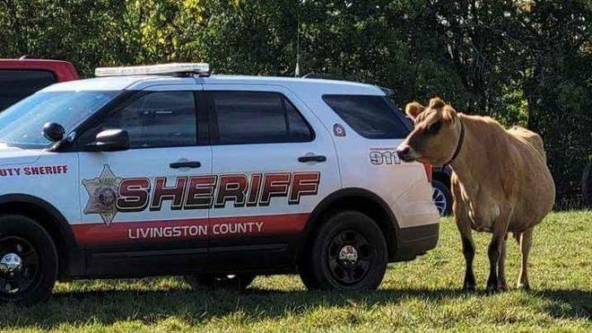 Clarabelle the Cow and the Livingston County Sheriff's Office have reached agreement on where to park in the future.