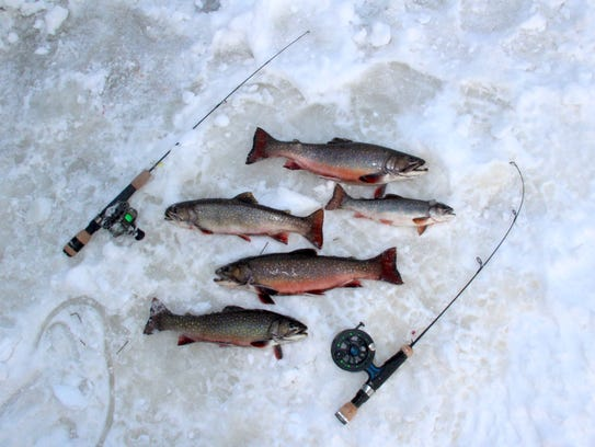 Five brook trout are displayed on the ice during a