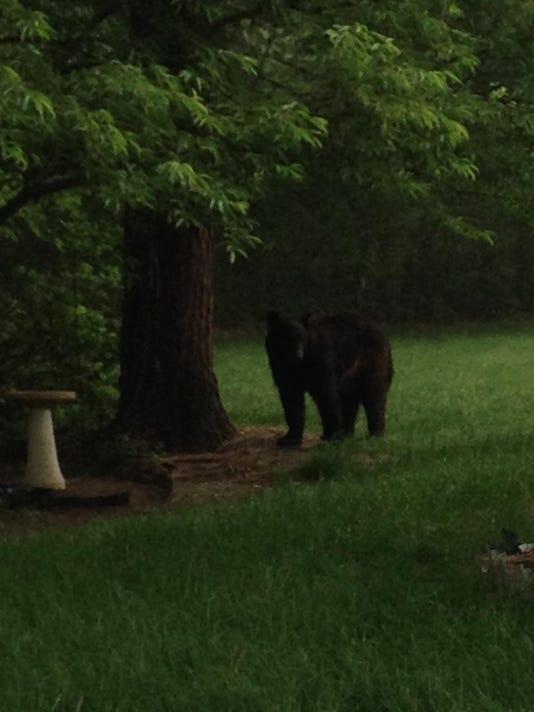 -bear.jpg_20140604.jpg