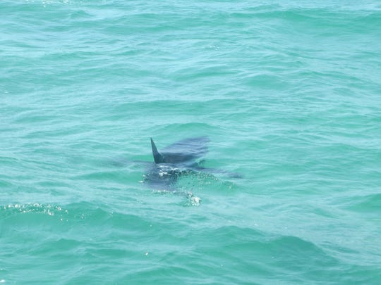 Captain Brian Thompson and Matt Watts spotted a Mako