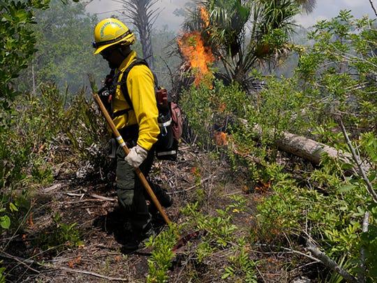 File: Rookery Bay National Estuarine Research Reserve have released plans for prescribed burns.