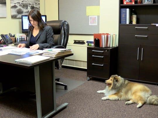 Finn relaxes while Vanderburgh County Deputy Prosecutor Kelly Corne works at her desk.