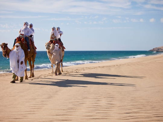 Camel riding in Cabo