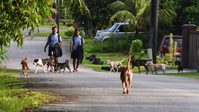 Benavente Middle School students Maemae Songeni, left, and Diara Eseuk, are approached by unleashed dogs as they walk down Chalan Bumuchacha in Dededo on Wednesday, Oct. 11, 2017. The girls did say that there are times that they are harrassed by the canines, as they travel along the stretch of road.