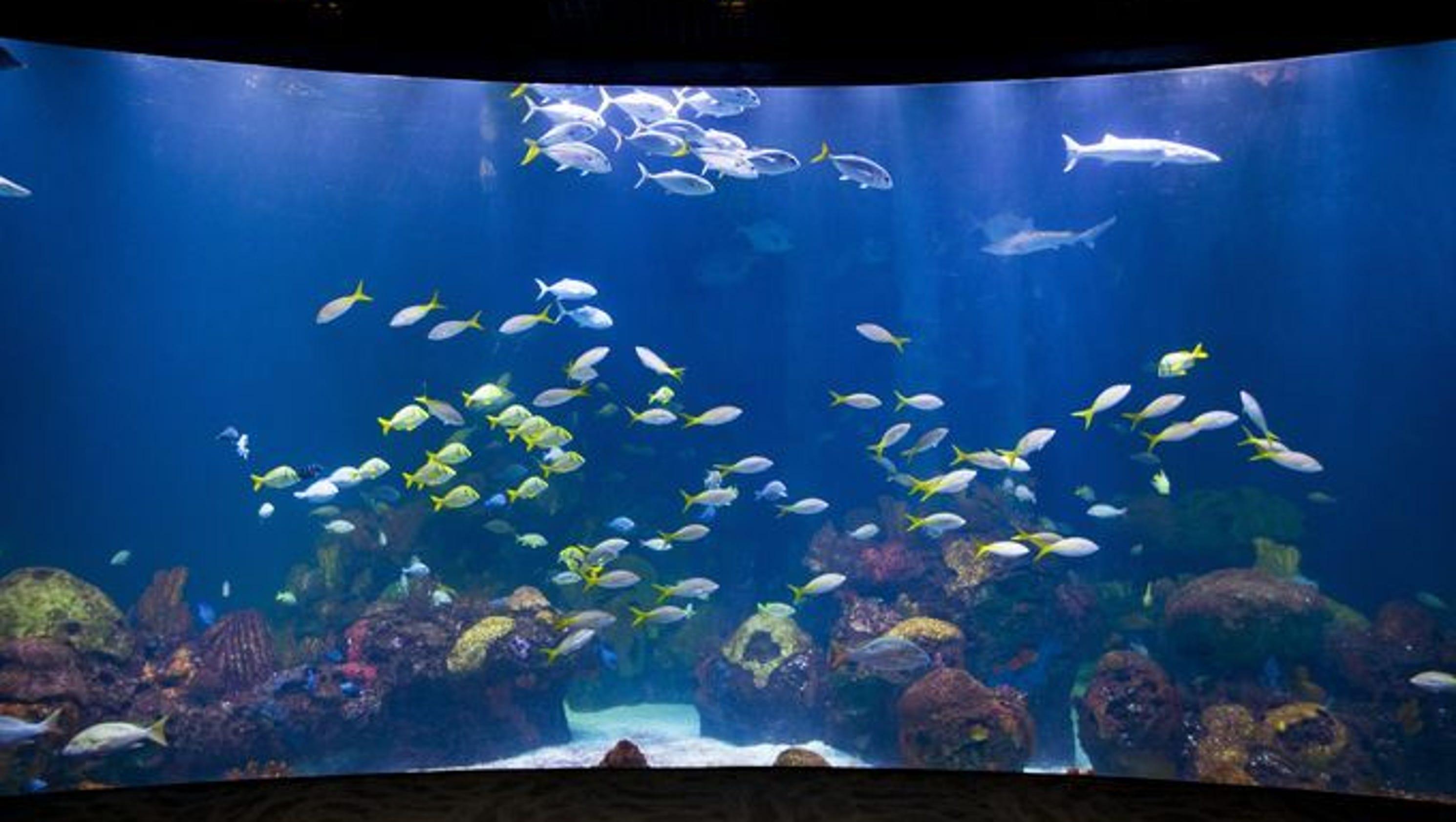 It s official Bass Pro CEO Morris says WOW museum aquarium now set