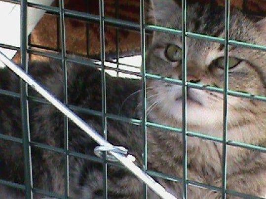 -SHEBrd_07-29-2012_Citizen_1_Z002~~2012~07~26~IMG_she_n_feral_cats.jpg_1_1_0.jpg