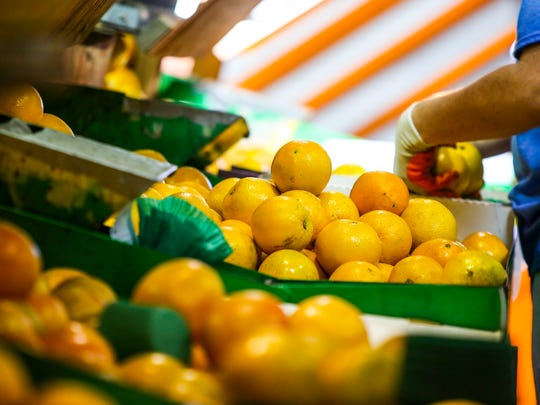 Sun Harvest Citrus is one of the few remaining gift-fruit