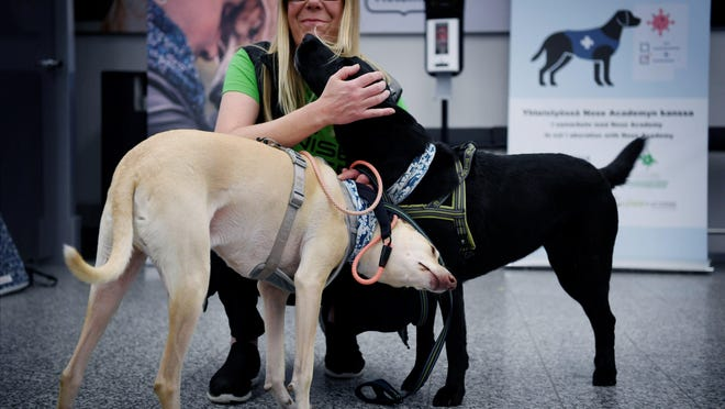 Sniffer dogs named Kˆssi (L) and Miina and trainer Susanna Paavilainen at the Helsinki airport in Vantaa, Finland on September 22, 2020. Four corona sniffer dogs are trained to detect the Covid-19 from the arriving passengers samples at the airport. LEHTIKUVA / ANTTI AIMO-KOIVISTO - FINLAND OUT. NO THIRD PARTY SALES.