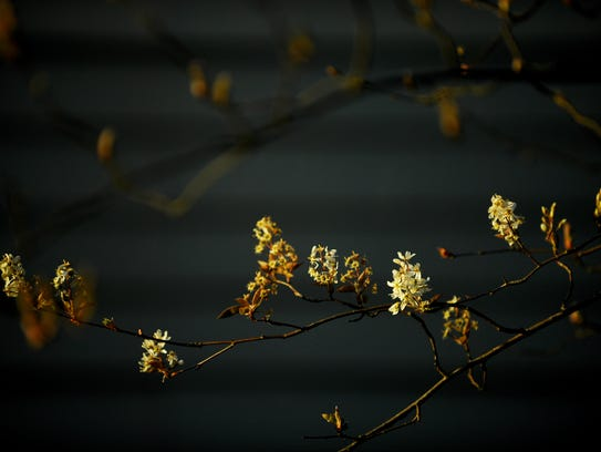 The last light of the sun touches new blooms on a tree