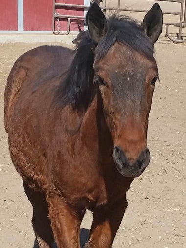 Nova is an orphaned filly from 2017. She is now a yearling,
