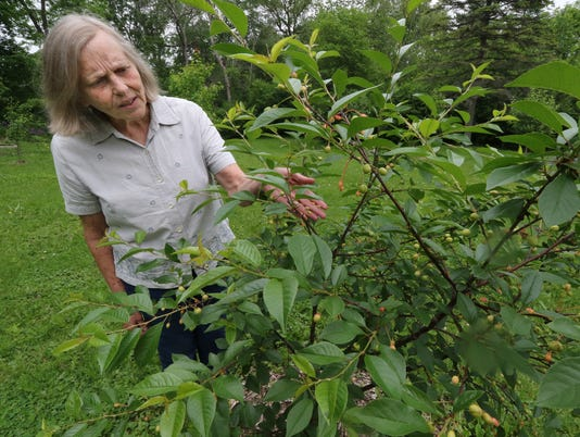 Orchard and pollinator garden flourish in Hales Corners