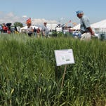2017 Farm Technology Days, growing better in Kewaunee County