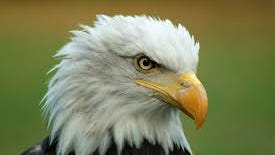 A pair of bald eagles has been spotted on Lake Julian in southern Buncombe County.
