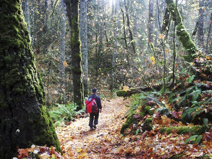 Top five hikes in Corvallis: No. 1 — Peavy Arboretum and McDonald-Dunn Research Forest.
