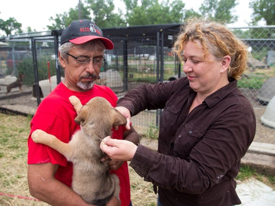 """Anita Wilke unties a colored ribbon from Leia, one of the puppies being cared for by her and her husband, Jim, at RezQ Dogs. The sheer number of puppies often leaves them at a loss for names, leaving them to draw inspiration from their favorite movies, """"she's from the Star Wars litter,"""" Anita said."""