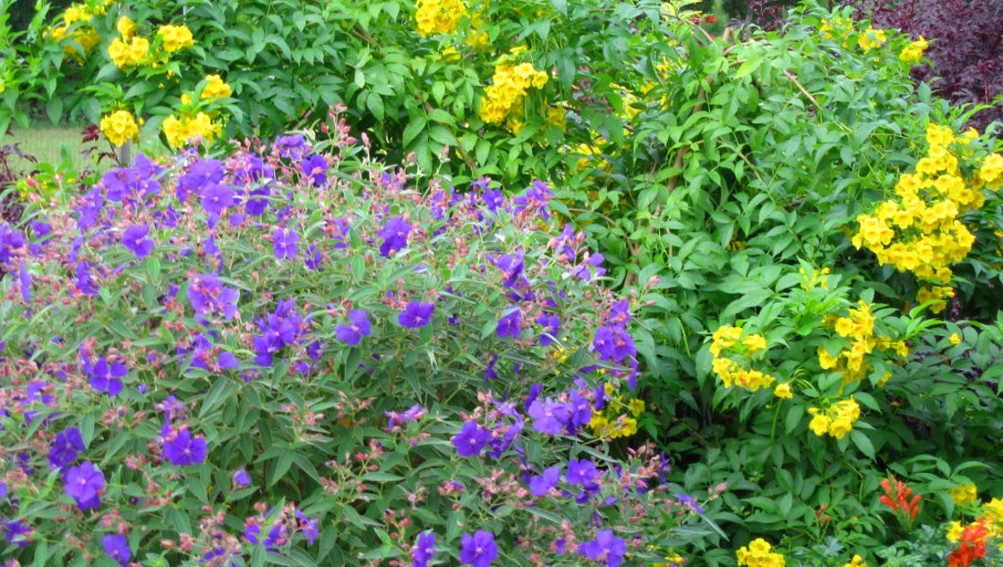Enjoy Landscape Color With Fall Blooming Perennials