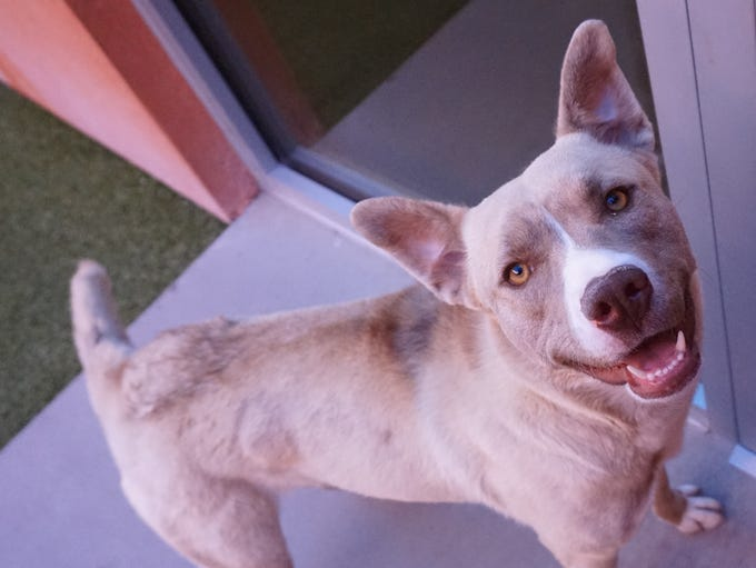 Bridgette is a playful gal who is looking for a new