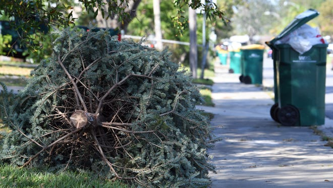 A discarded Christmas tree awaits pickup at the curb in Melbourne on Dec. 27. Residents can put their trees out for removal on their regular yard waste collection day.