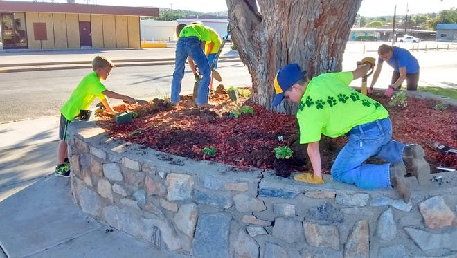 Cub Scout Pack #110 recently planted coral bells and columbines around this tree in Gough Park. Funds to obtain these plants were part of a grant from Keep New Mexico Beautiful.