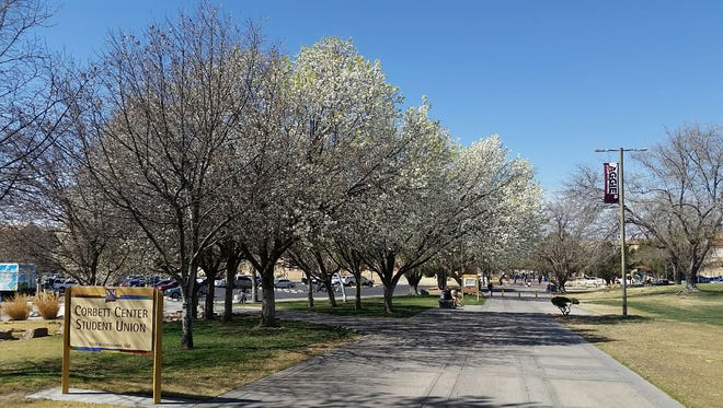 Trees are seen in bloom on the campus of New Mexico State University on Wednesday, March 14, 2018. Spring break runs from March 19-23 on campus.