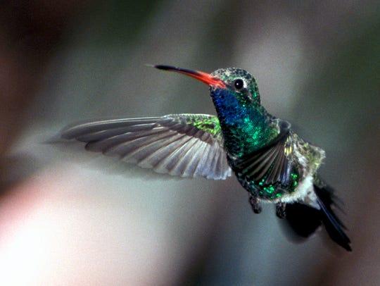 The 6th Annual Sedona Hummingbird Festival will take