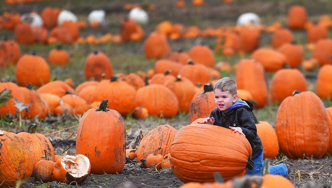 Talon Labahn, 4, attempts to roll his pumpkin through the pumpkin patch at the Country Apple Orchard 20th Annual Harvest Fest, Saturday, Sept. 30, in Harrisburg.