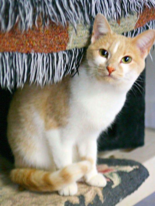 636108318250373014-tina-cat.jpg
