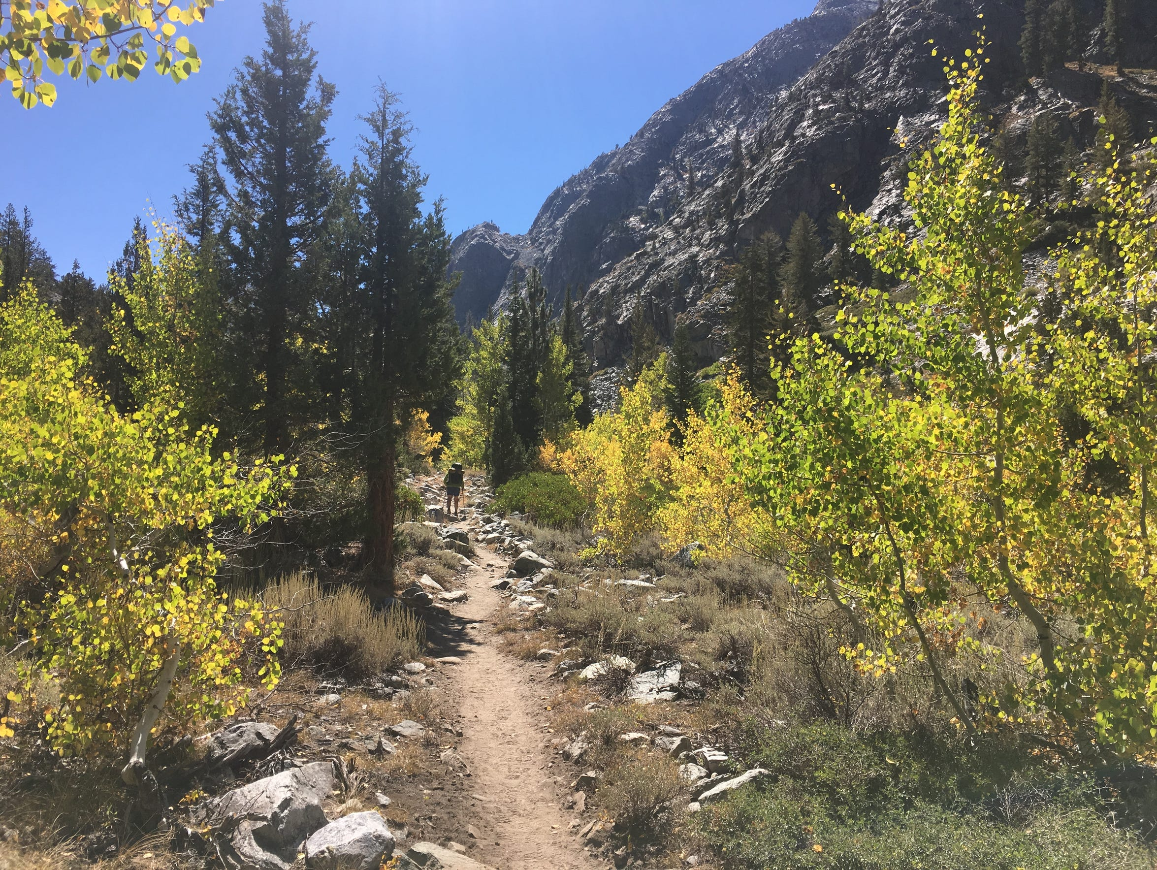 Fall color on the John Muir Trail in Goddard Canyon