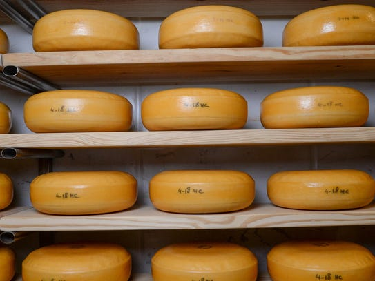 Blocks of  gouda cheese age at Forx Farm on Dobbins