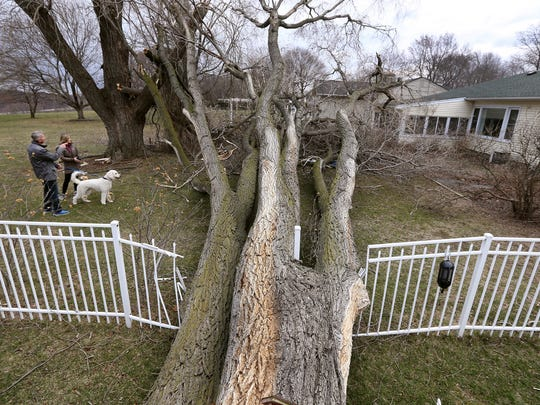 Jaime and Deirdre Ciaccia check on a neighbor on Newport Road in Irondequoit on March 9, 2017, after a large tree fell through a fence, narrowly missing the house next door.
