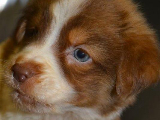 635663345058122766-Puppy-2