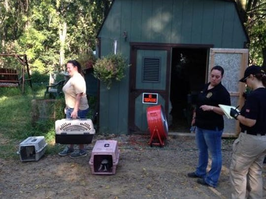 Rescuers begin to take away the 300 rabbits found at a Hunterdon County home on Friday.