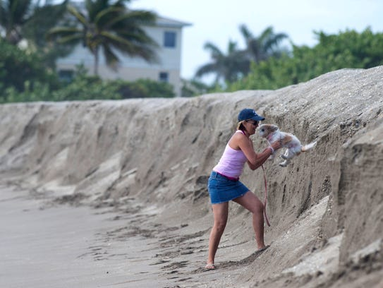 Maggie Rivera, of Fort Pierce, helps her dog Lily down the eroded shoreline Monday, April 18, 2016, on South Beah at Jetty Park in Fort Pierce. A bill in the Florida Senate would dedicate $50 million of the state's Land Acquisition Trust Fund for beach renourishment projects.