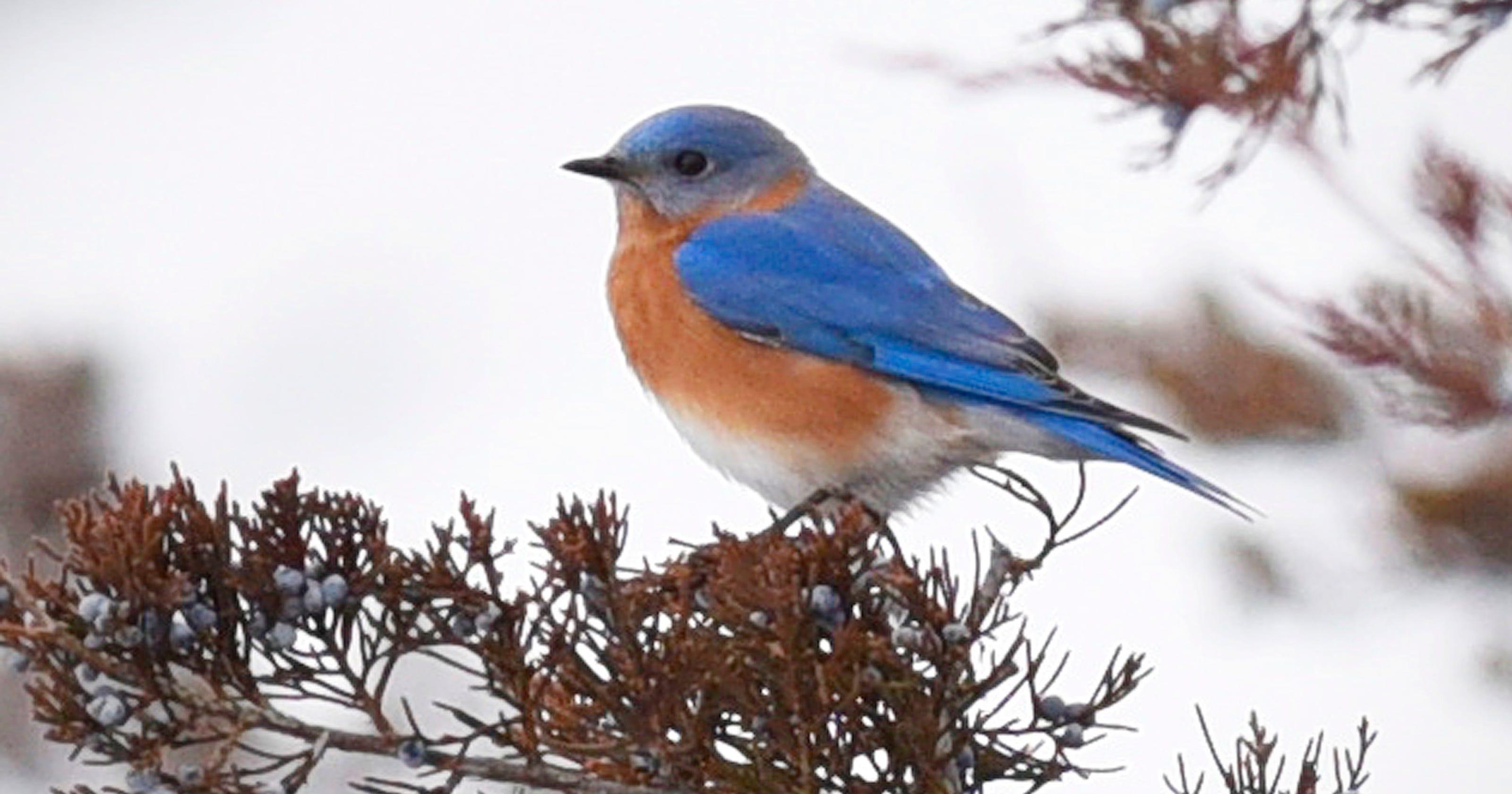 Winter birding: Seeking species off the beaten path