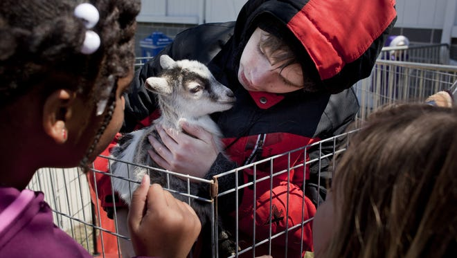 Bailey Adams, of Jeddo, holds a young Nigerian pygmy goat during Earth Fair 2015 at Goodells County Park.