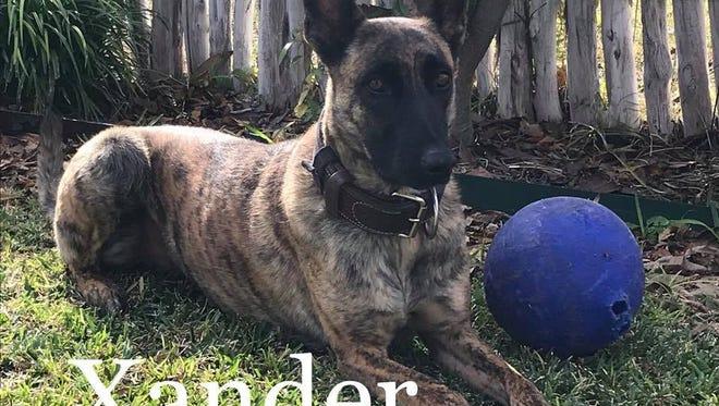 Xander, a San Angelo police service dog, is a part of SAPD's K-9 teams.