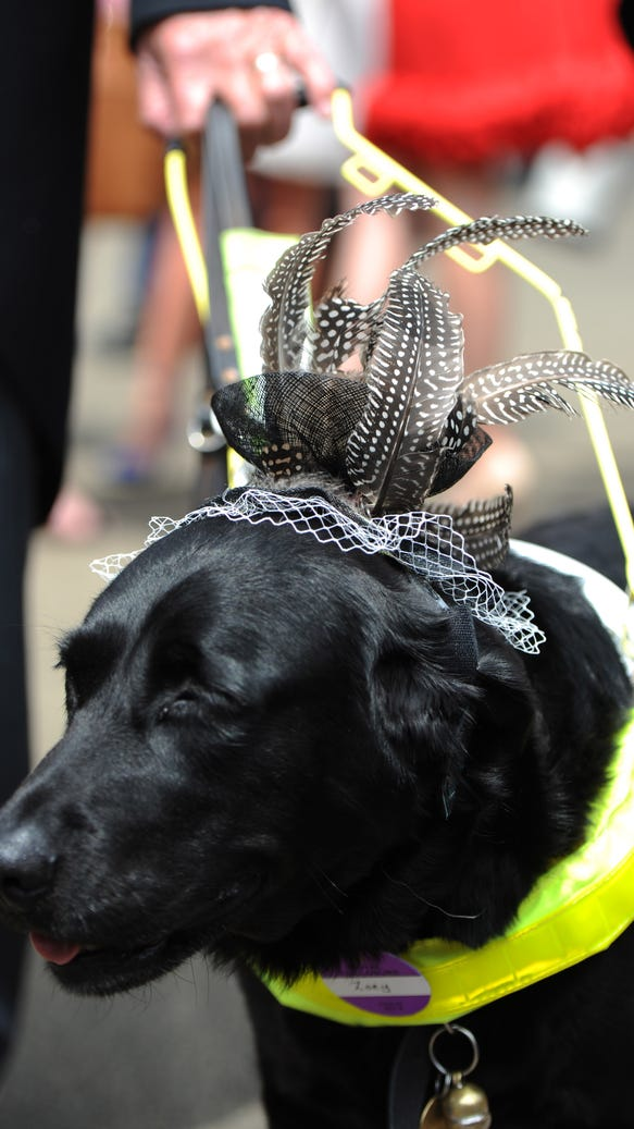 Service dog in hat
