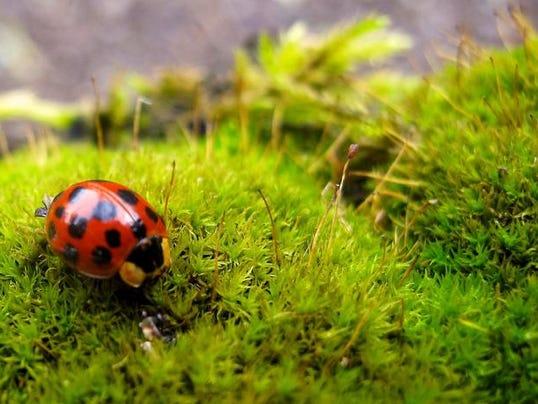 Gardening-Organic Pes_Schu.jpg