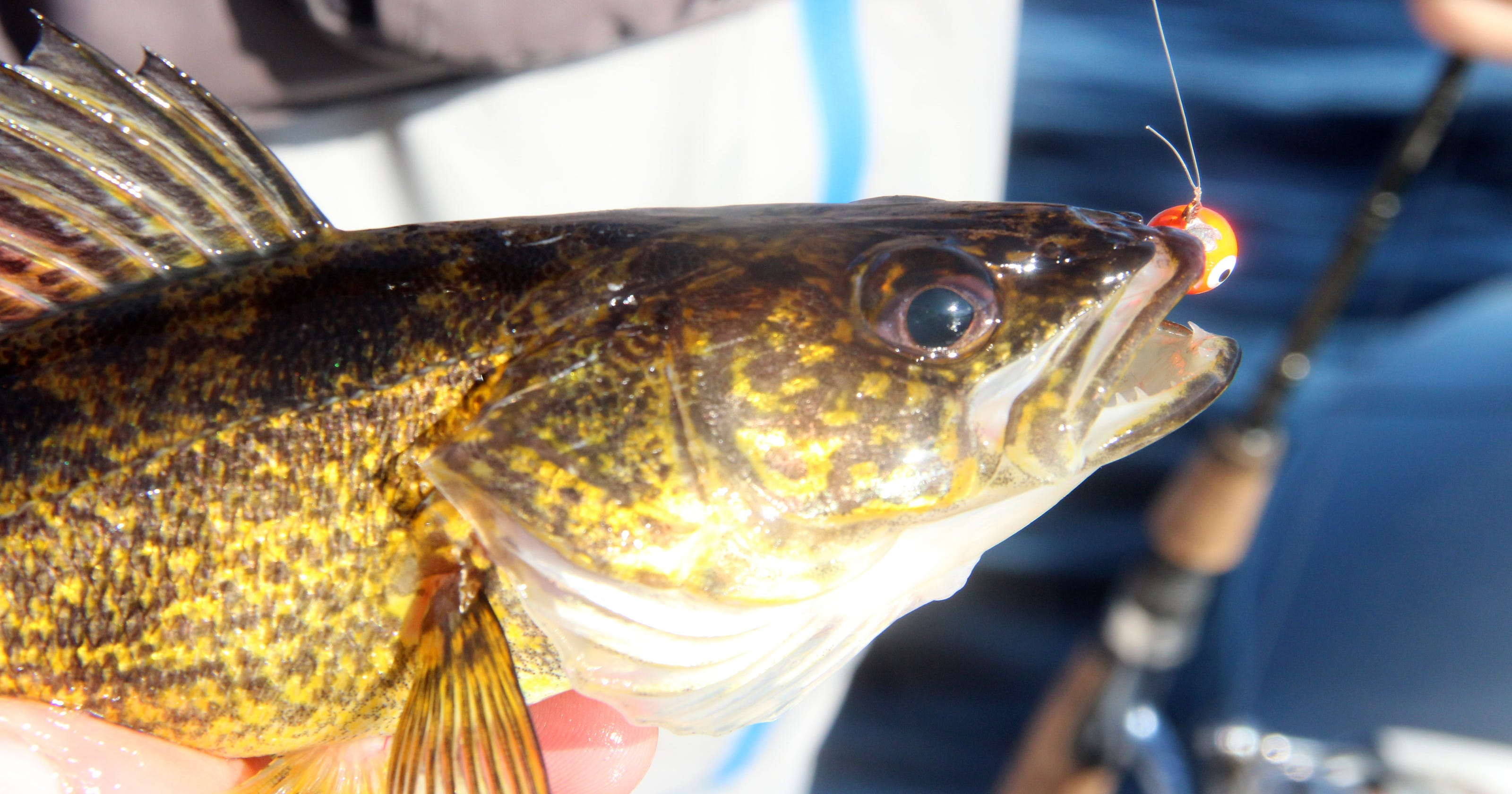 DNR - Weekly Fishing Report
