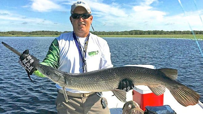 Dave Robb, Jr. picked this 55-inch, 22-pound longnose gar as one of his more rewarding catches on his way to the 2016 club championship in the Florida Sport Fishing Association. He said he enjoyed the challenge of the two weeks it took him to determine how to attract the big gars. The trick? Live stumpknockers.