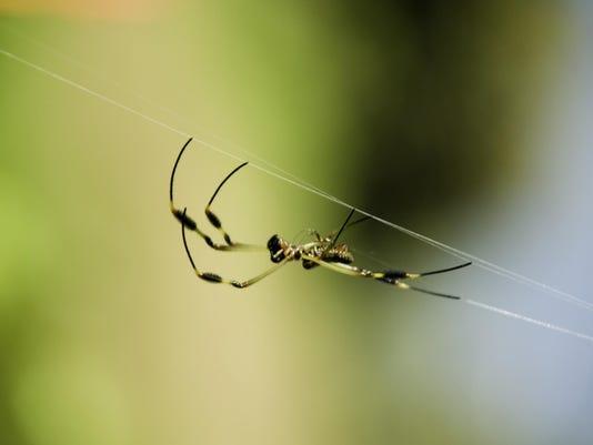 SpiderSpinWeb-200308605-001