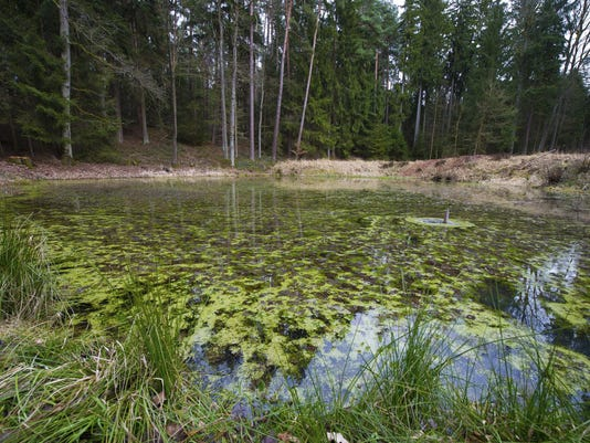 635769682990643798-pond-ThinkstockPhotos-475210577