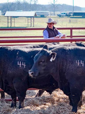 Ranchers at 44 Farms raise Black Angus-Wagyu beef cattle whose steaks are sold at the top steakhouses and restaurants in Dallas.