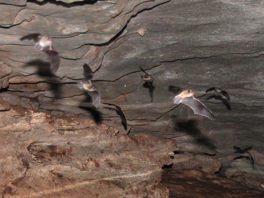 t bats 025